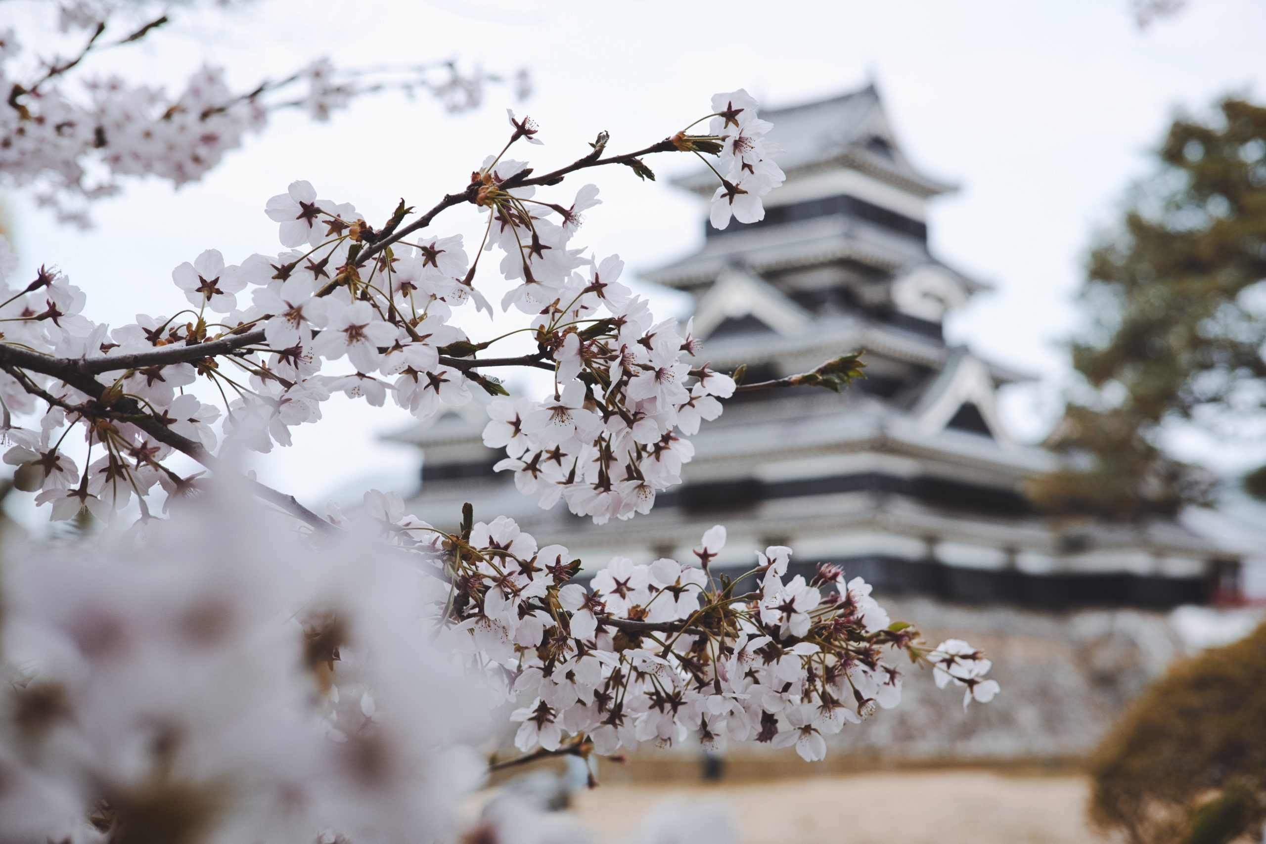 Gaji TKI di Jepang: Lowongan dan Besar Gajinya